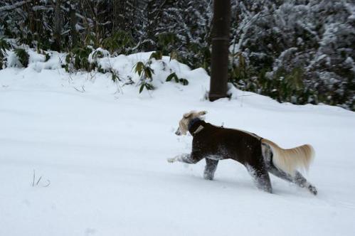 思いがけずの雪遊び3