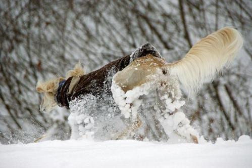 思いがけずの雪遊び4