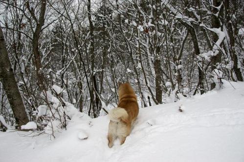 思いがけずの雪遊び7