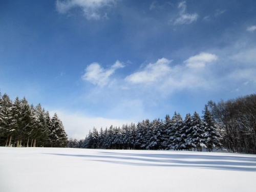 雪国わんこ11