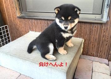 ミツ子チビ 黒 負けへんよ!