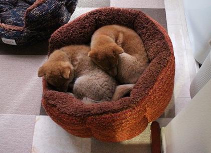 二人で一つのベッド