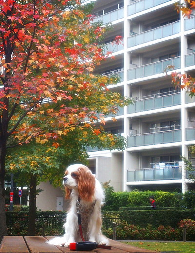 LINEcamera_share_2014-11-09-11-19-10.jpg