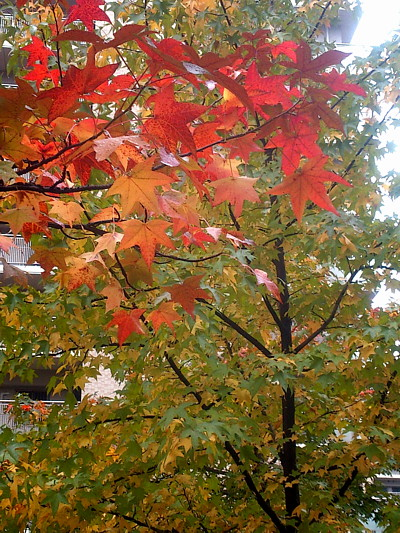 LINEcamera_share_2014-11-09-11-29-15.jpg