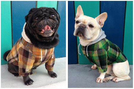 momisdogwear201211 (2)