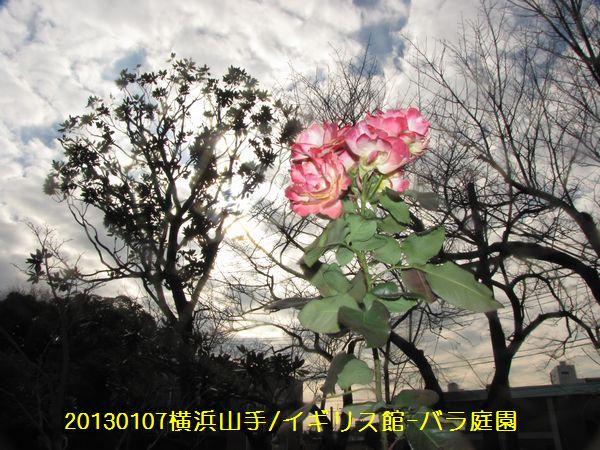0107hana09.jpg