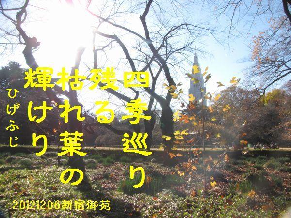 1206fuyuku-12.jpg