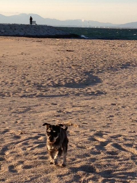 BOZZ砂浜