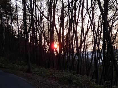 雑木林から日の出