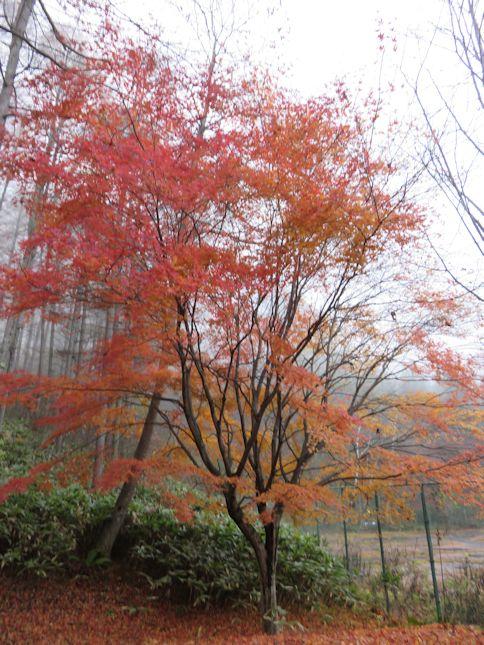 高原のツリー