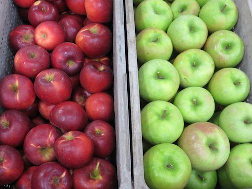 リンゴ!!
