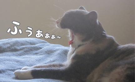 coz_05302013-01.jpg