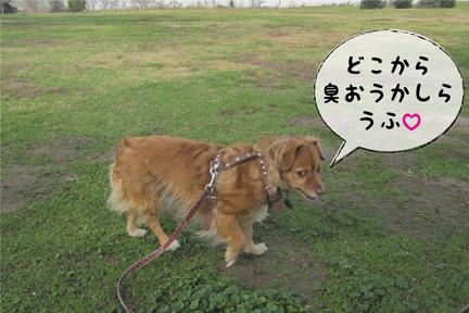fox_01302013-01.jpg