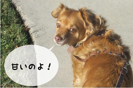 fox_02012013-01.jpg