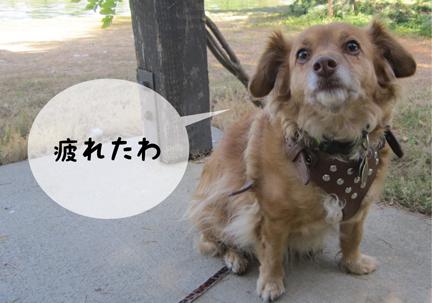 fox_05302013-01.jpg