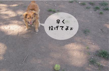 foxball_04242013-01.jpg