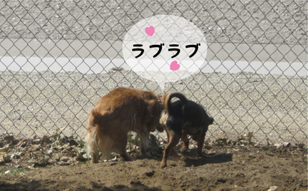 foxfriend_04242013-01.jpg