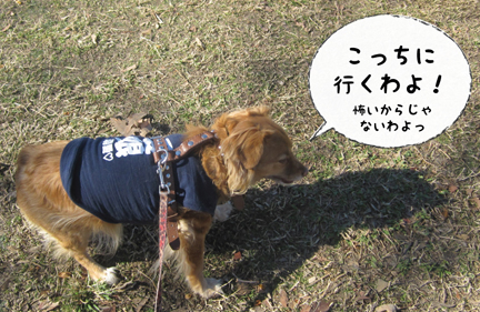 foxy_02222013-01.jpg