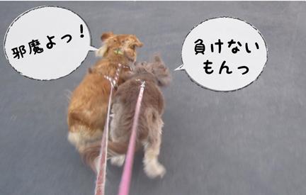 fz1_03022013-01.jpg