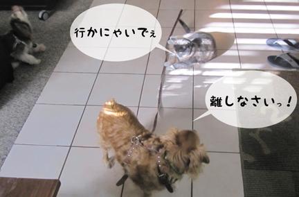 trio_02072013-01.jpg