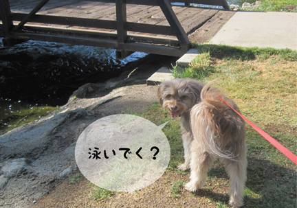 zig_05302013-01.jpg