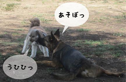 zigfriend_04242013-01.jpg