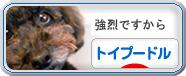 にほんブログ村-トイプードル
