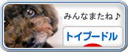 にほんブログ村-犬ブログ-トイプードル