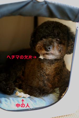 8nakanohito2.jpg
