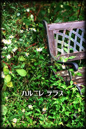 DSC_8810.jpg