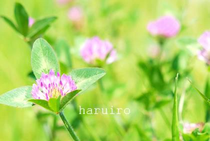 haruiro21_20120516010756.jpg