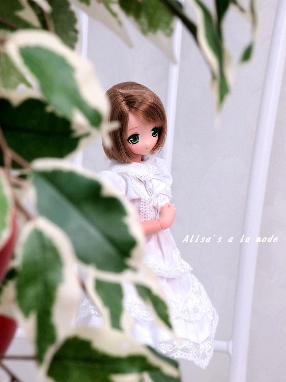 s-P3300314.jpg