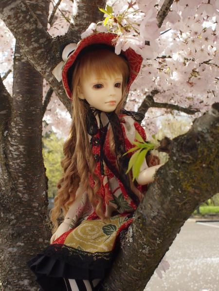 桜 13 1