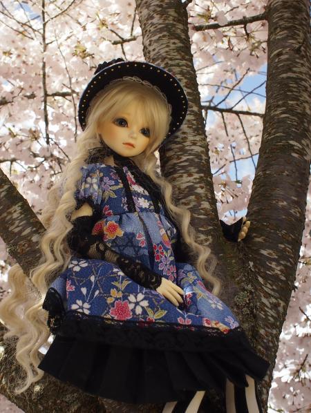 桜 13 2