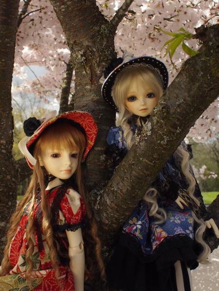 桜 13 3
