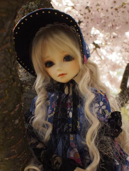 桜 13 4