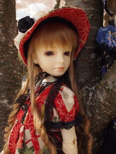桜 13 5