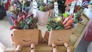多肉植物♪ 花っ葉工房