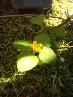 小さな小さなお花♪