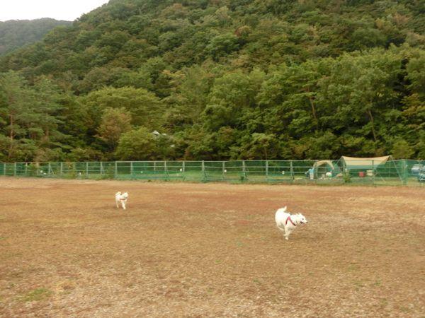 2014.10.4 PICA富士西湖6