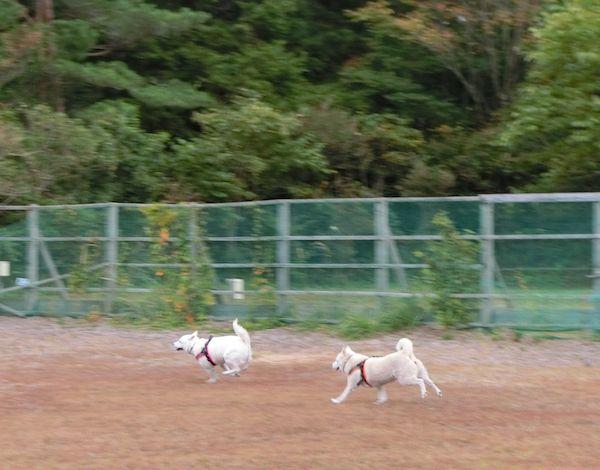 2014.10.4 PICA富士西湖7