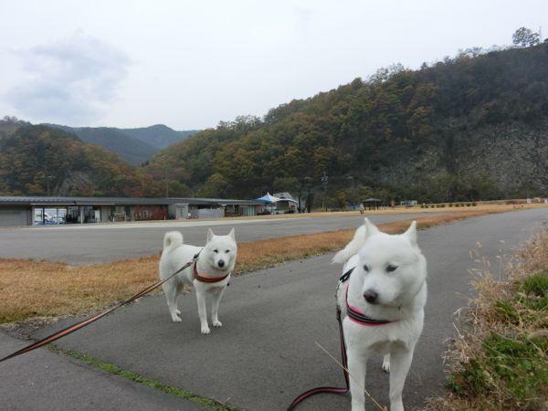 2014.11.9 朝の散歩3