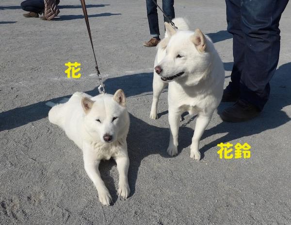 2014.11.16 花&花鈴1