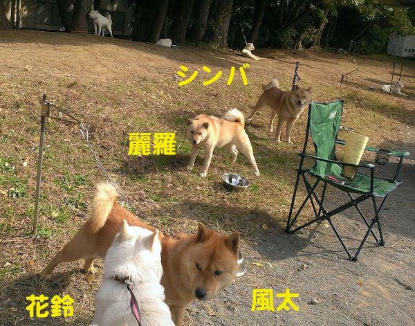 2014.11.16 風太&麗羅2