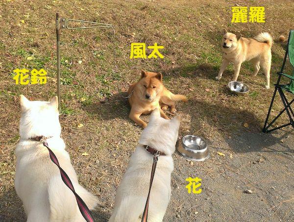 2014.11.16 風太&麗羅1