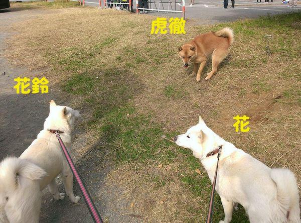 2014.11.16 虎徹くんと