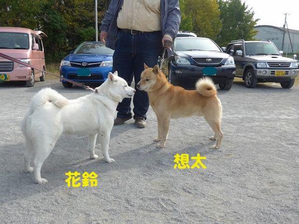 2014.11.16 花鈴&想太