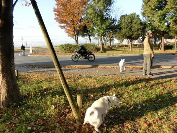 2014.11.23 いちごの里よしみ1