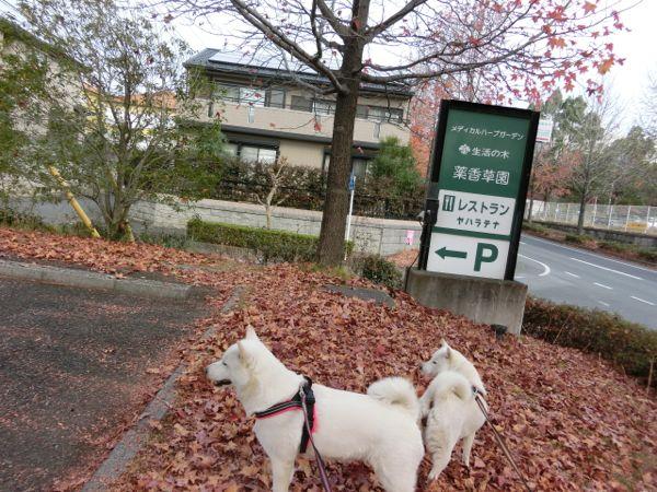 2014.11.24 生活の木