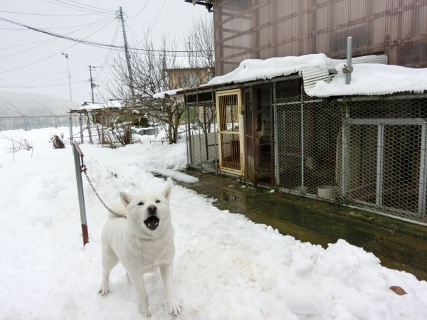 2014.12.7 花鈴2